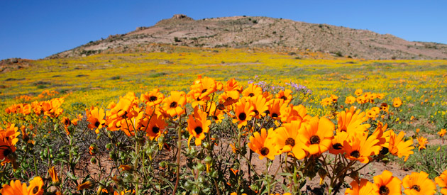 flowers in spring - www.south-africa-info.co.za